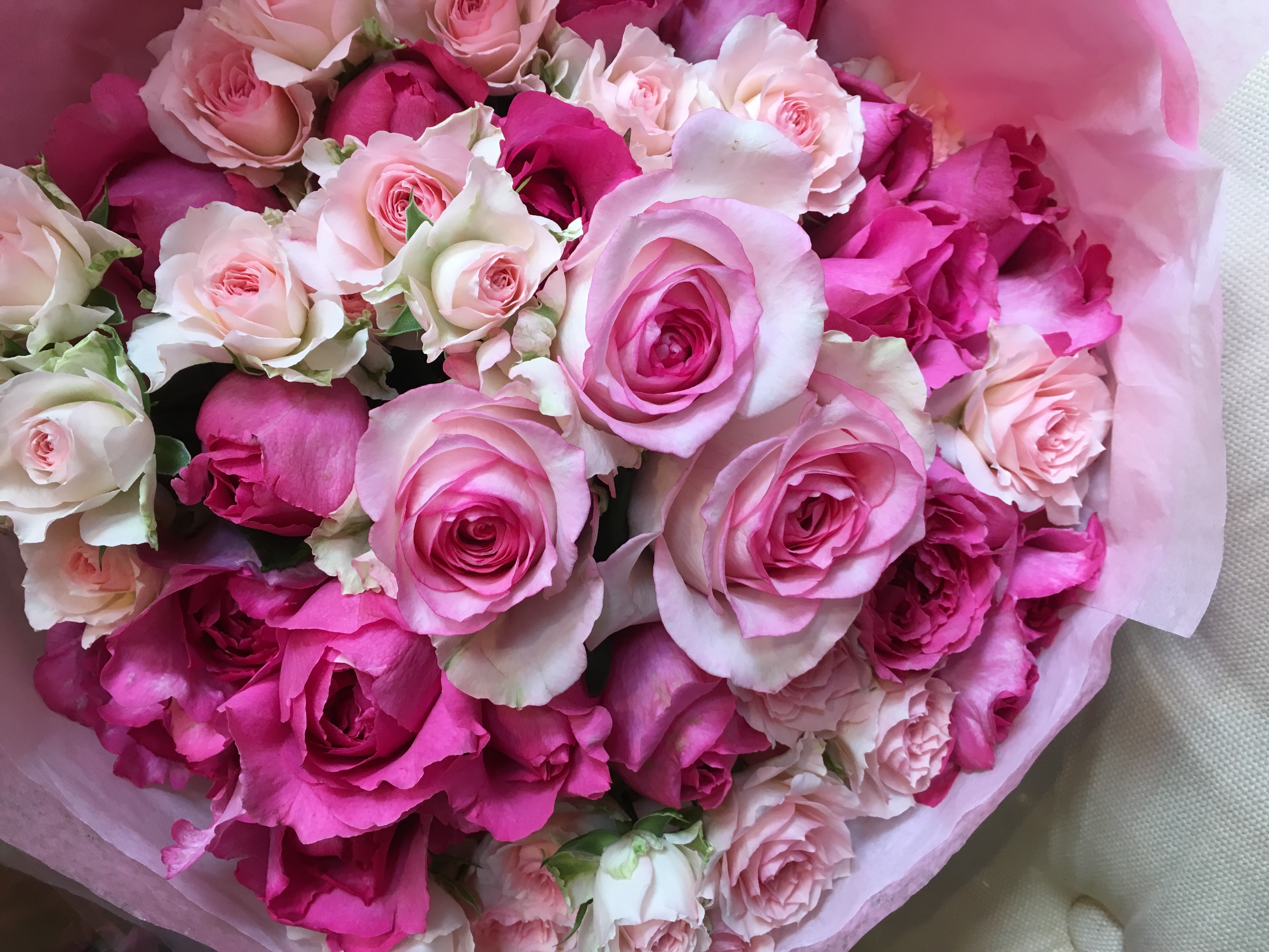 item_rose_b02