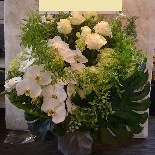 iwabana-white