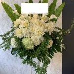 standflower-whiteandgreen