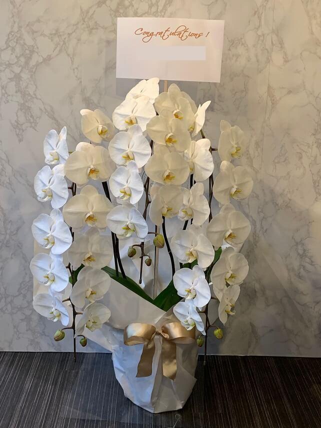kochoran-orchid-hachi