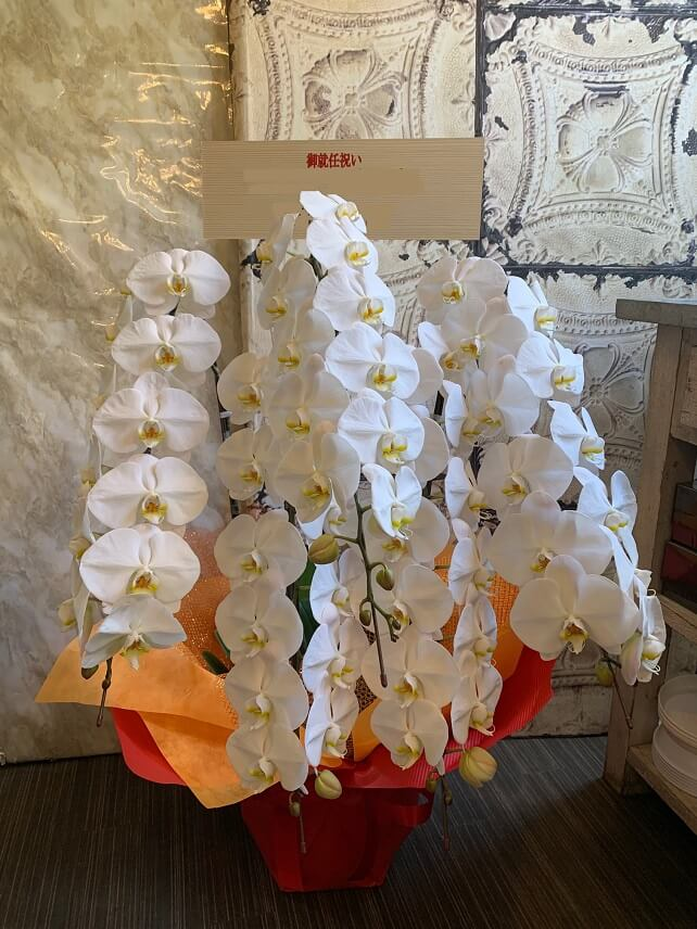 orchid-kochoranhachi